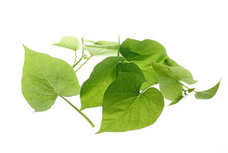sweet potato leaf 1.jpg