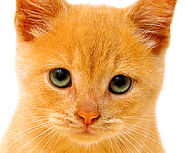 cat 1a.jpg
